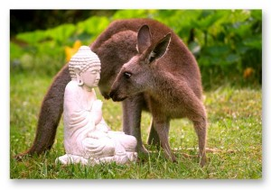 roo and buddha